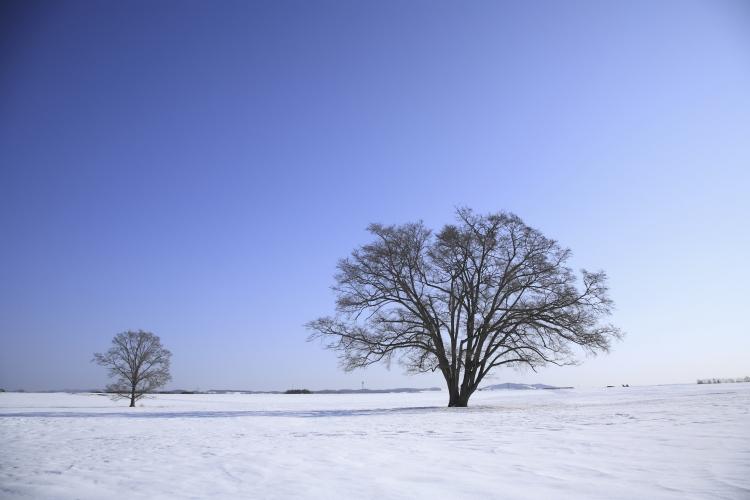trees in winter.