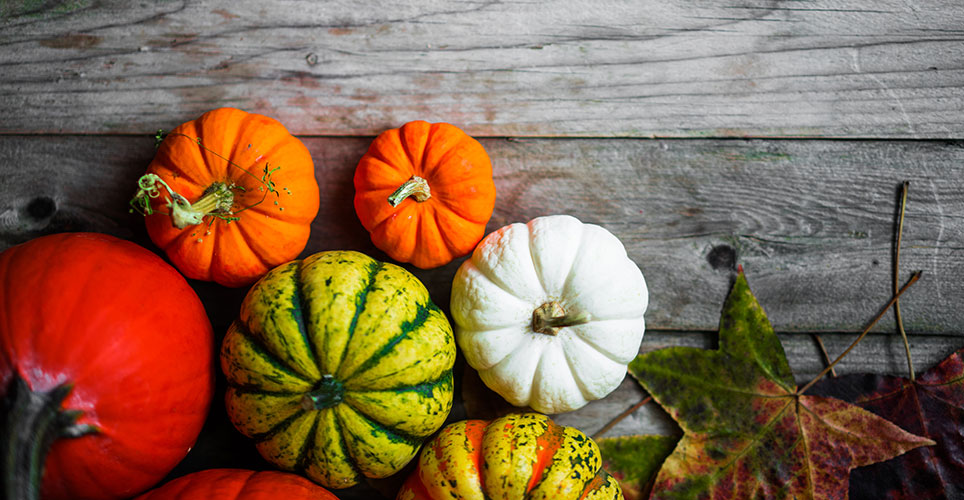 array of fall pumpkins