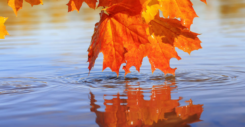 Colorful leaf above water