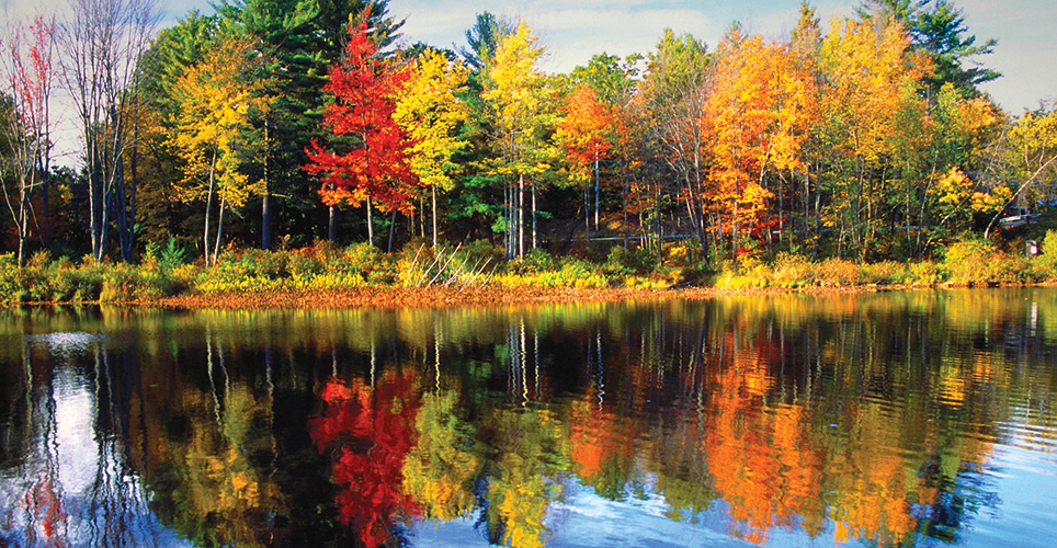 Colorful trees reflected in calm water
