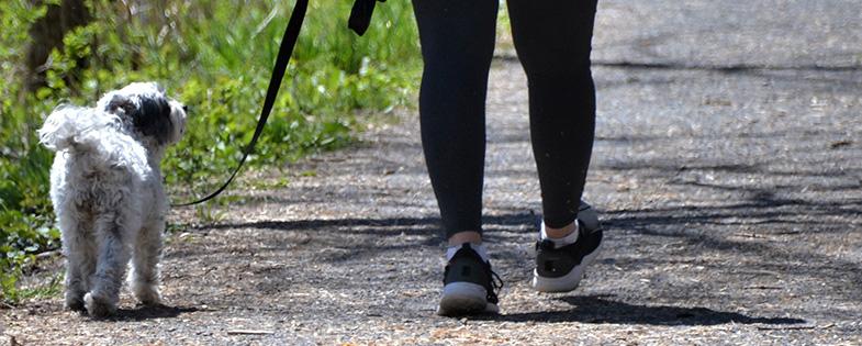 A person walking a dog