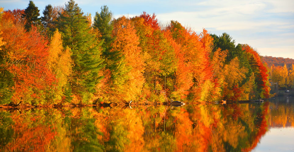trees by a lake sprouting fall colors