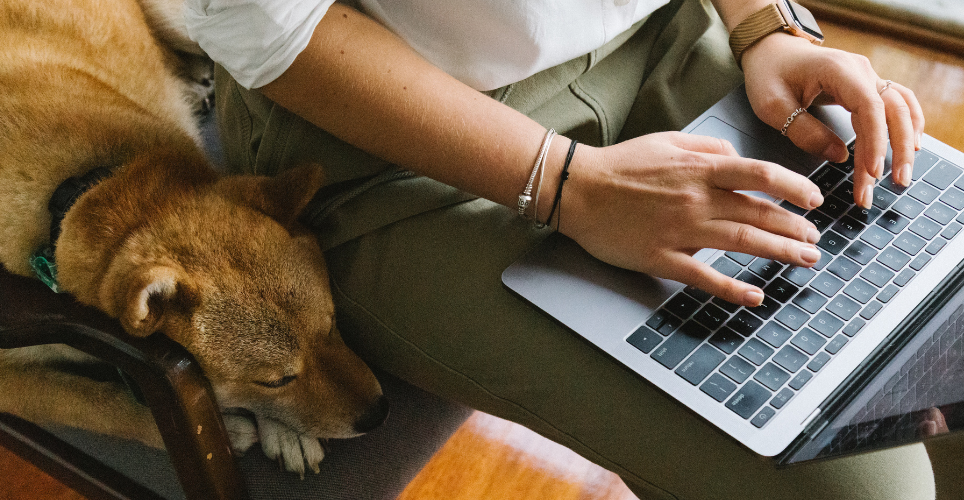 Person typing on laptop with dog sitting next to them