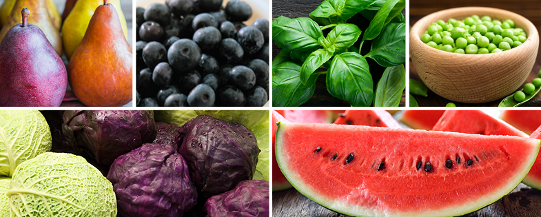 pears, peas, watermelon, basil and more fruits and veggies